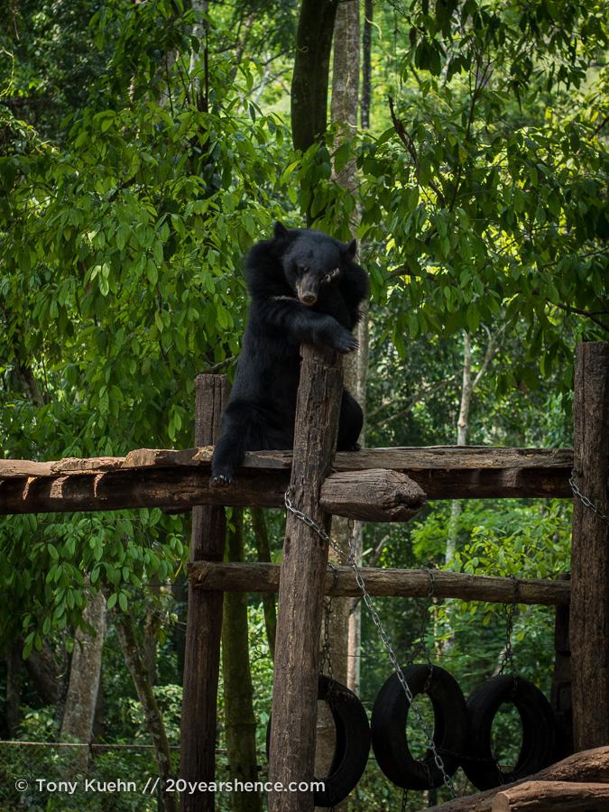 Free the Bears sanctuary
