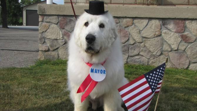 كلب رئيسا لبلدية
