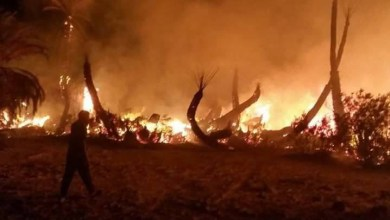 حريق يلتهم نخيل مرادة