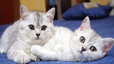 تربية القطط بالمنازل