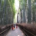 そうだ京都へ行こう❗️