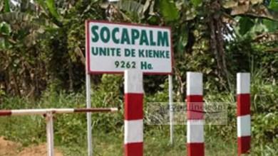 Photo de Cameroun – Nkapa: Les riverains bloquent la Socapalm