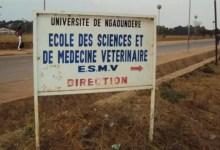 Photo of Résultats concours des Docteurs Vétérinaires de l'ESMV de l'Université de Ngaoundéré 2019