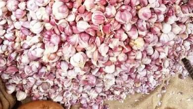 Photo of Cameroun: 120.000 FCfa pour s'offrir un sac de 100kg d'ail