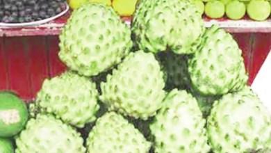 Photo de À la découverte du COROSSOL, le fruit qui guérit le cancer : 10 000 fois plus puissant que le traitement de chimiothérapie