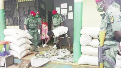 Photo of Cameroun: Trois trafiquants d'organes humains aux arrêts à Foumbot