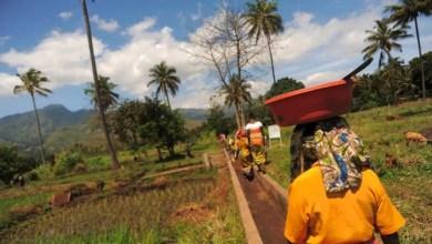 développement du secteur rural