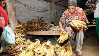 Photo de Cameroun: Quand le plantain perd son goût