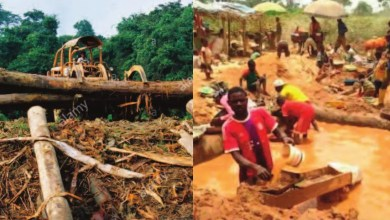 Déforestation et exploitation minière
