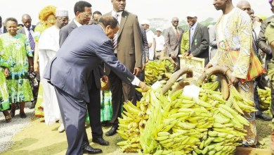 Paul BIYA soutien l'agriculture, l'élevage