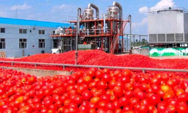 production de tomate
