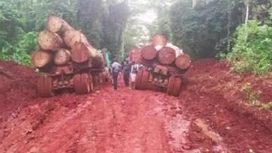 Exploitation illégale des forêts