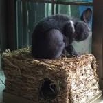 兔子會自己清潔身體