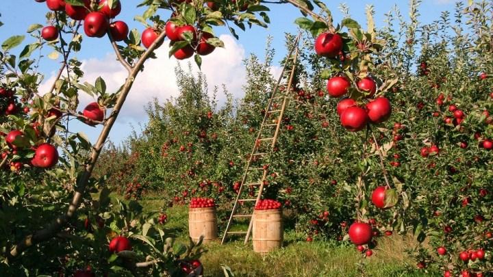 Opryski drzew owocowych
