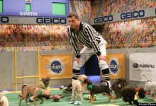 Photo of The Puppy Bowl's Utterly Adorable And Powerful Adoption Message
