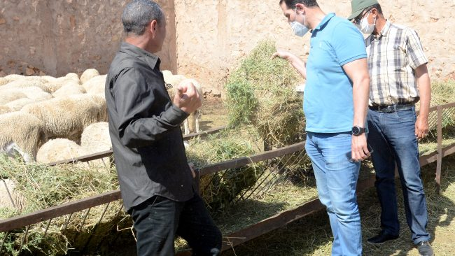 Coronavirus: déclaration du Groupe d'Experts nationaux au sujet de la Célébration de l'Aid El Adha