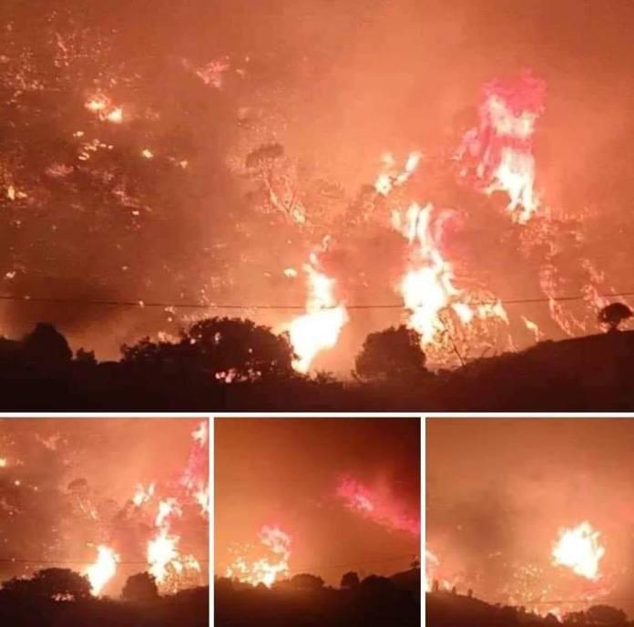 Incendies de forêts : Djerad n'écarte pas l'hypothèse d'un acte criminel