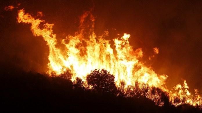 Incendies de forêts à Chlef: arrestation de cinq individus
