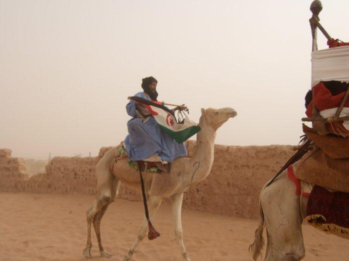 Hommage à un ami: La chamelle de Hamdi