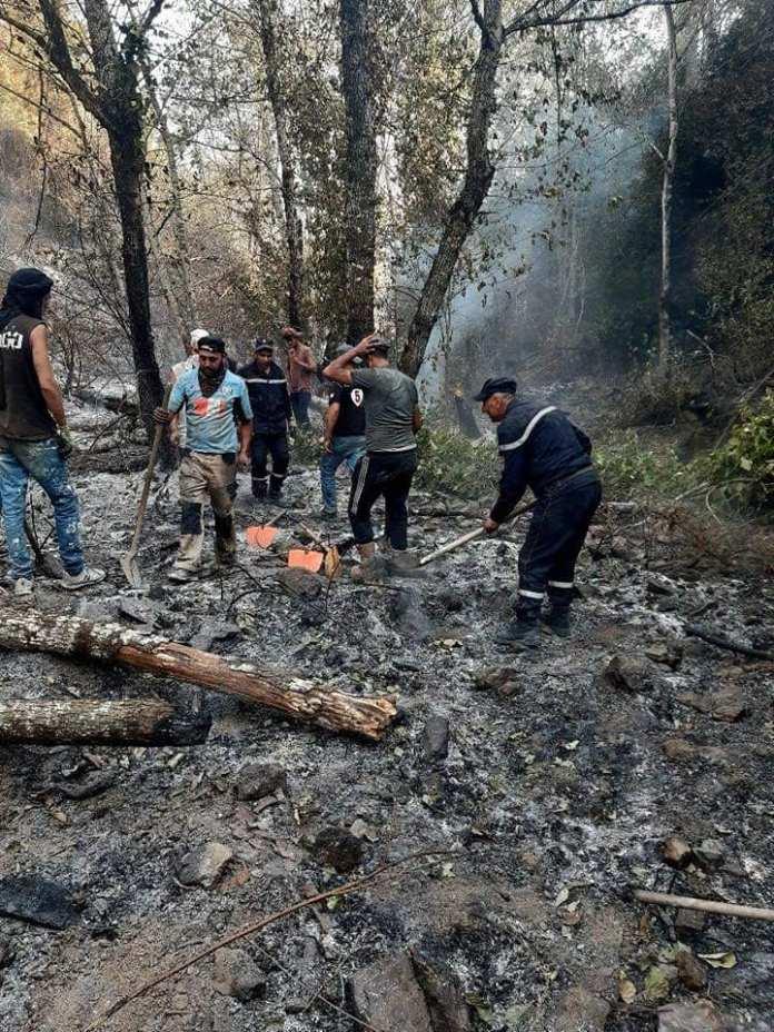 Protection civile: extinction de 27 feux de forêts dans 12 wilayas