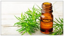 14 Benefits and Uses for Tea Tree Oil