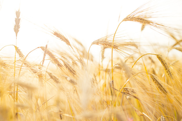 Know Your Nutrients -Wheat