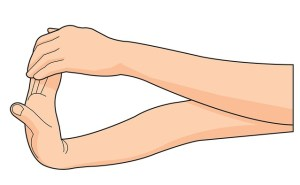 wrist flexion stretches