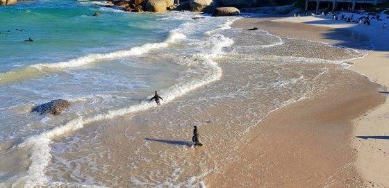 Penguines (3)