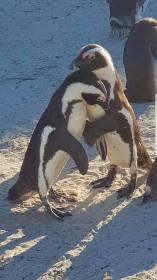 Penguines (4)