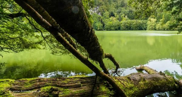 Lagoa Congro Baumstumpf