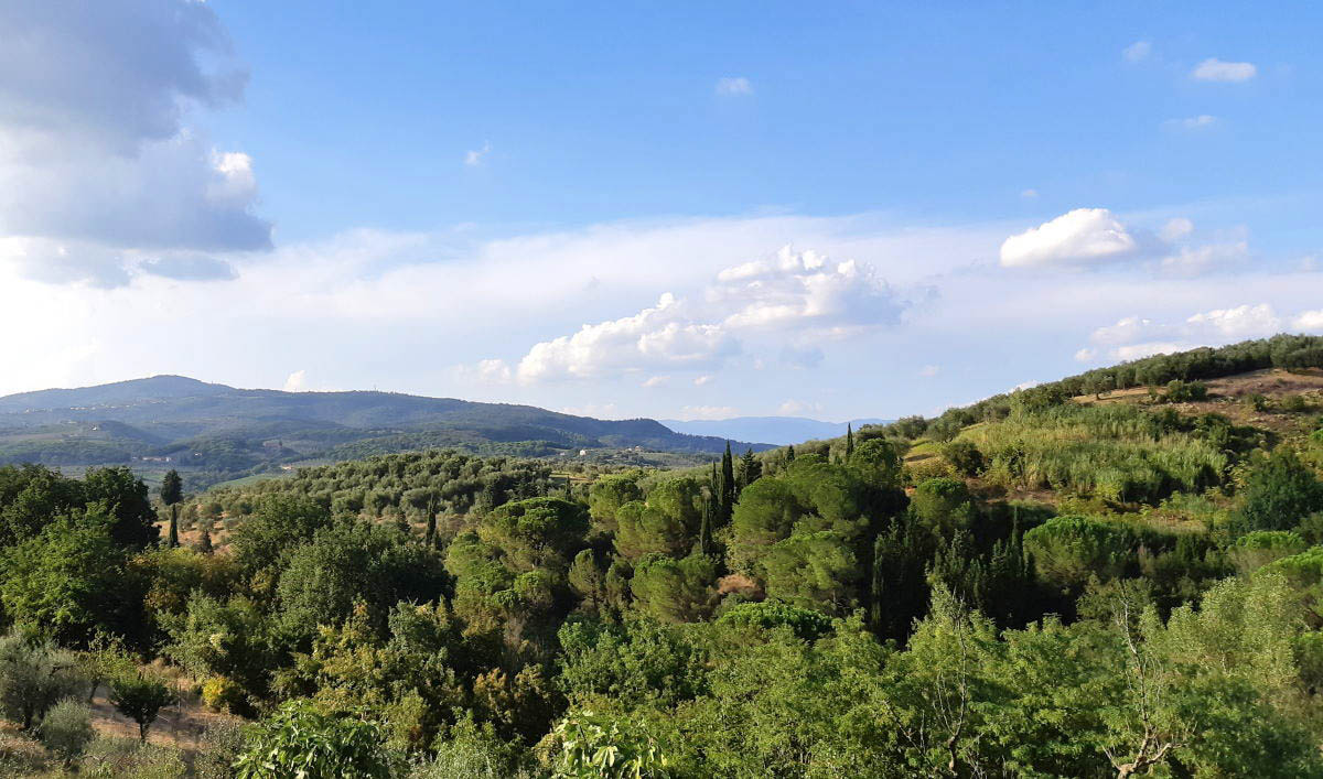 Agriturismo in Toscana : Tenuta San Vito, tra ottima accoglienza e buon cibo
