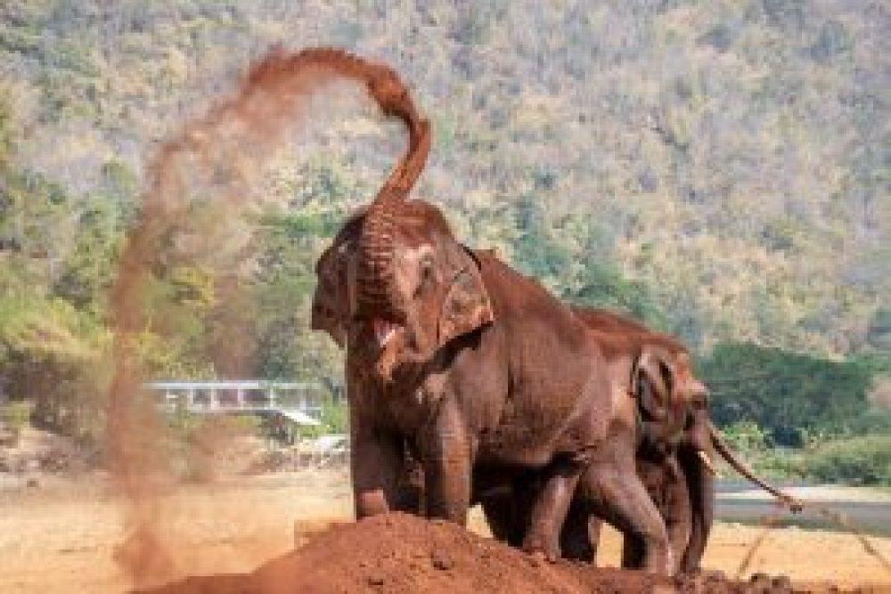 Cosa vedere in Thailandia Chiang Rai Elefanti 2 Cuori in Viaggio