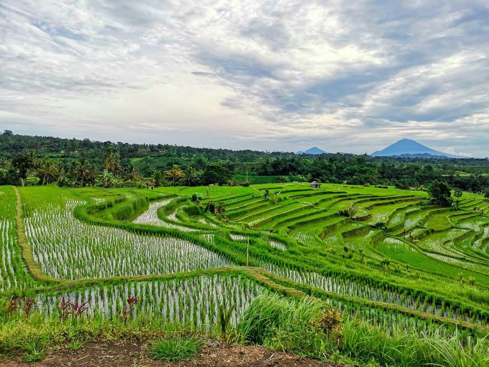 Cosa vedere a Bali Risaie di Jatiluwih