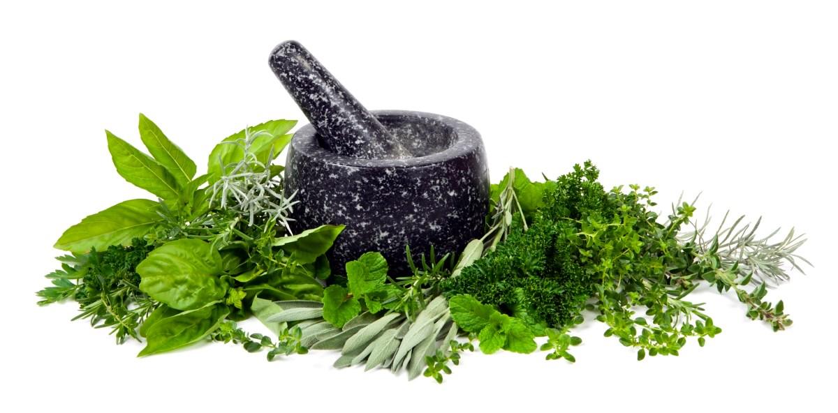 Episode 381 – Herb Garden