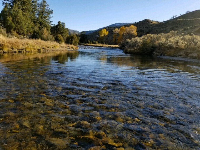 fly fishing and Thanksgiving