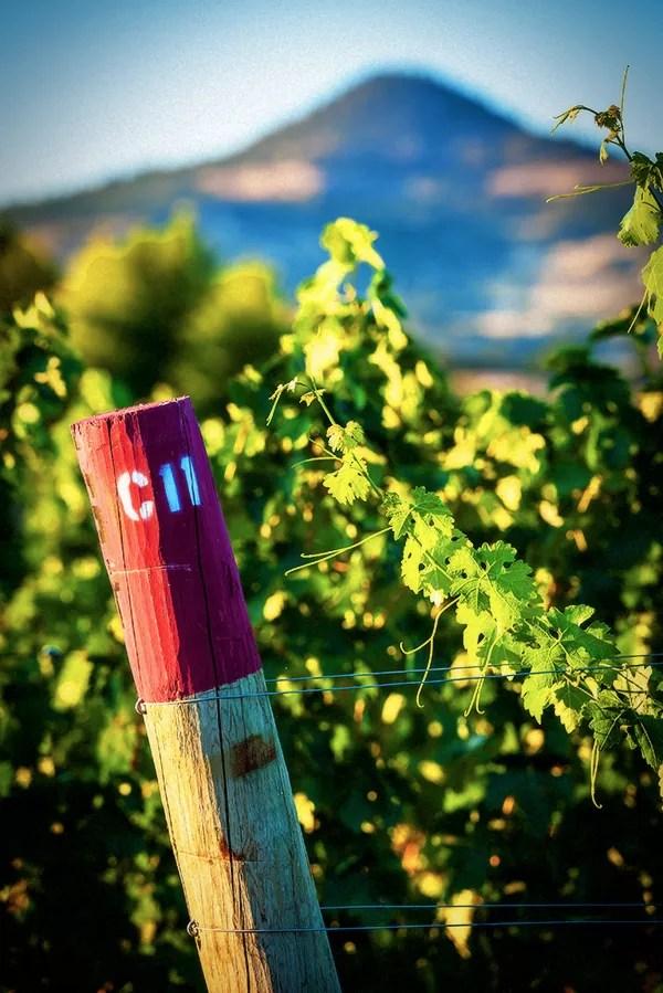 2Hawk Vineyard and Winery Vineyard Post