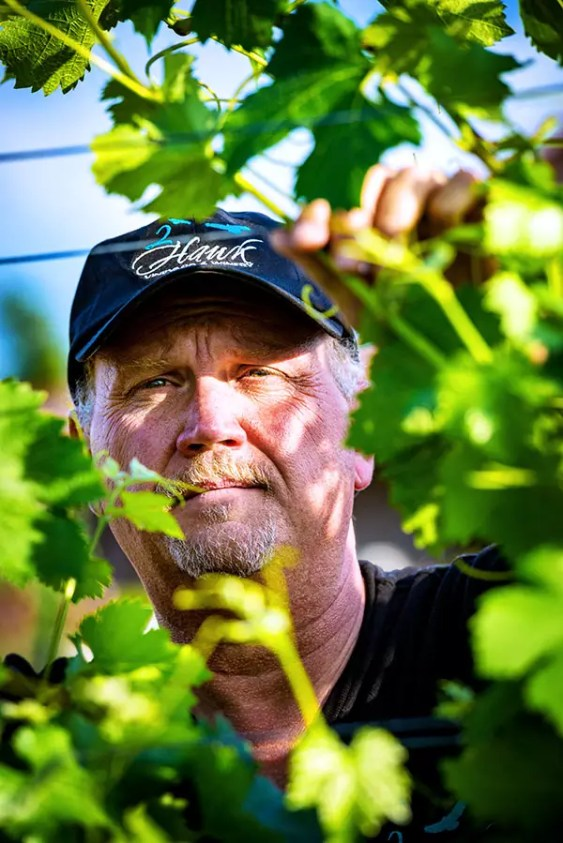 2Hawk Vineyard and Winery Owner Ross Allen in Vineyard with Grapevines