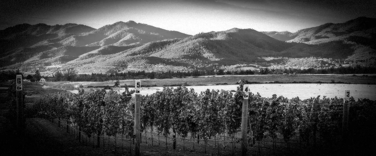 2Hawk Vineyard and Winery Golden Vineyard (Grayscale)