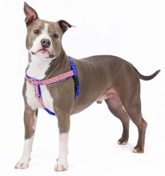 stars and stripes limited edition freedom no pull dog harness [ 1000 x 1000 Pixel ]
