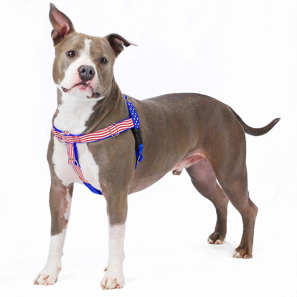 hight resolution of  stars and stripes limited edition freedom no pull dog harness