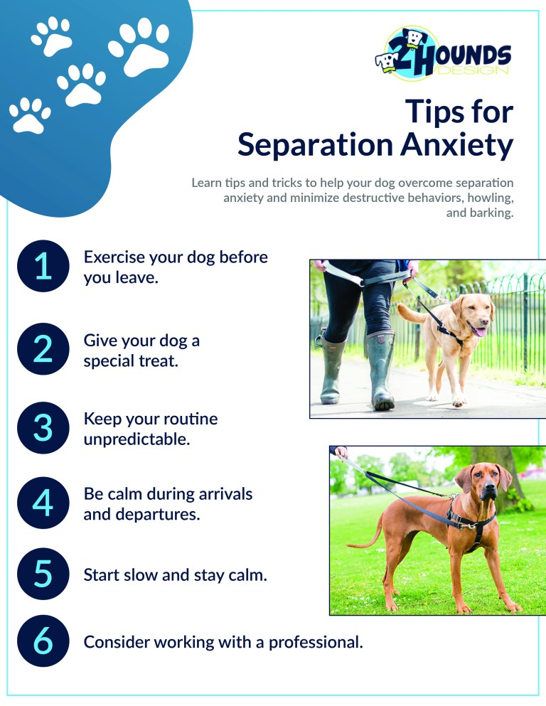 Dog Training Tips – Puppy Separation Anxiety