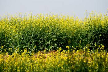 Agriculture Industry of India
