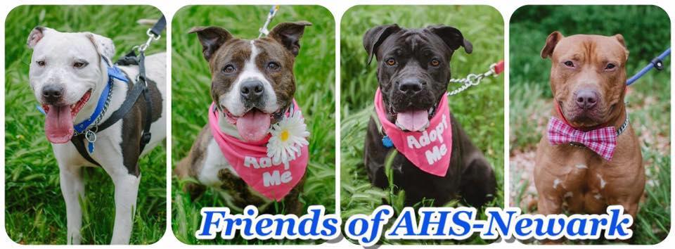 Associate Humane Society Of Newark's Summer Fun Adoption Event