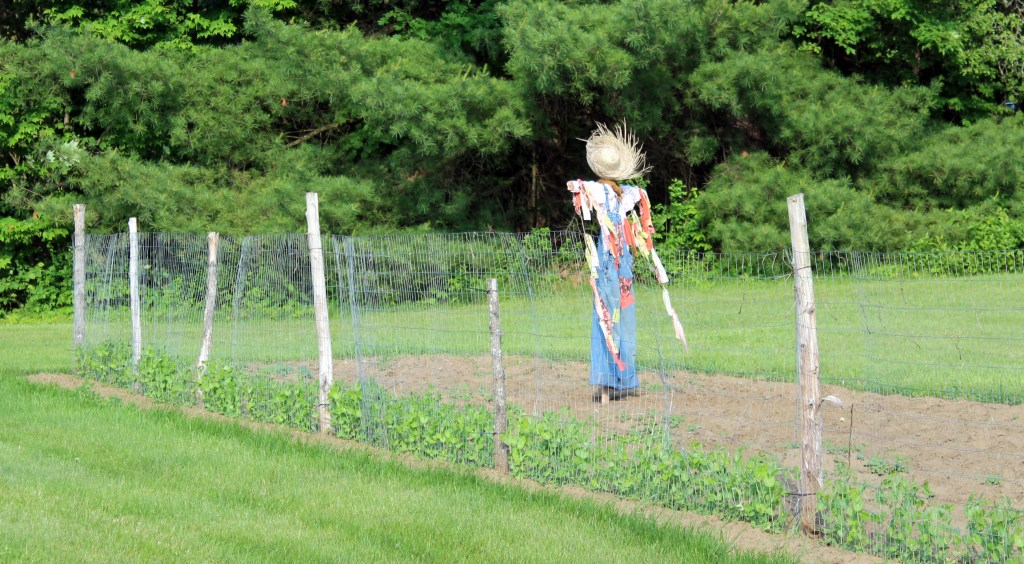scarecrow 021