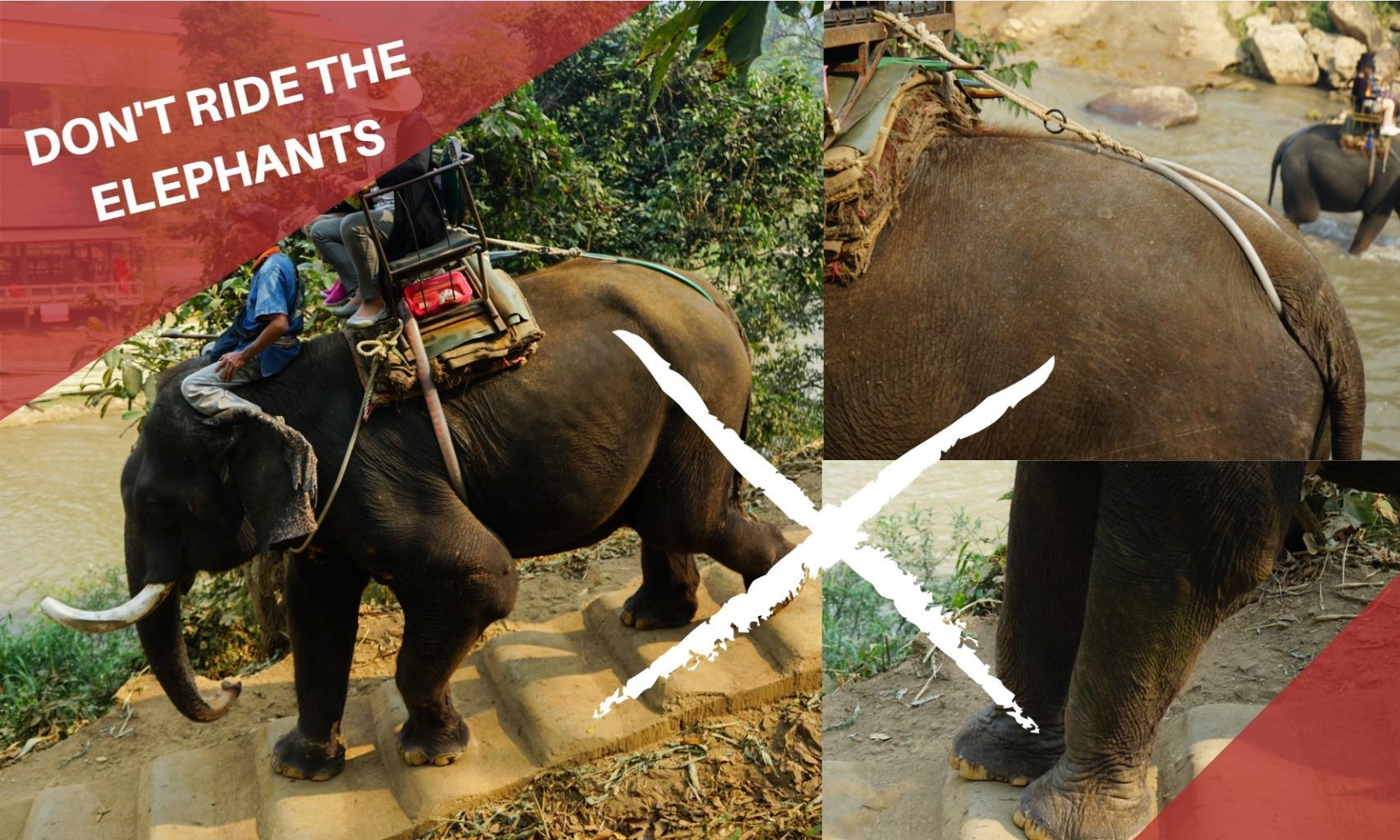 拒騎大象!不要騎大象的九個原因!2019湄登大象學校直擊紀錄
