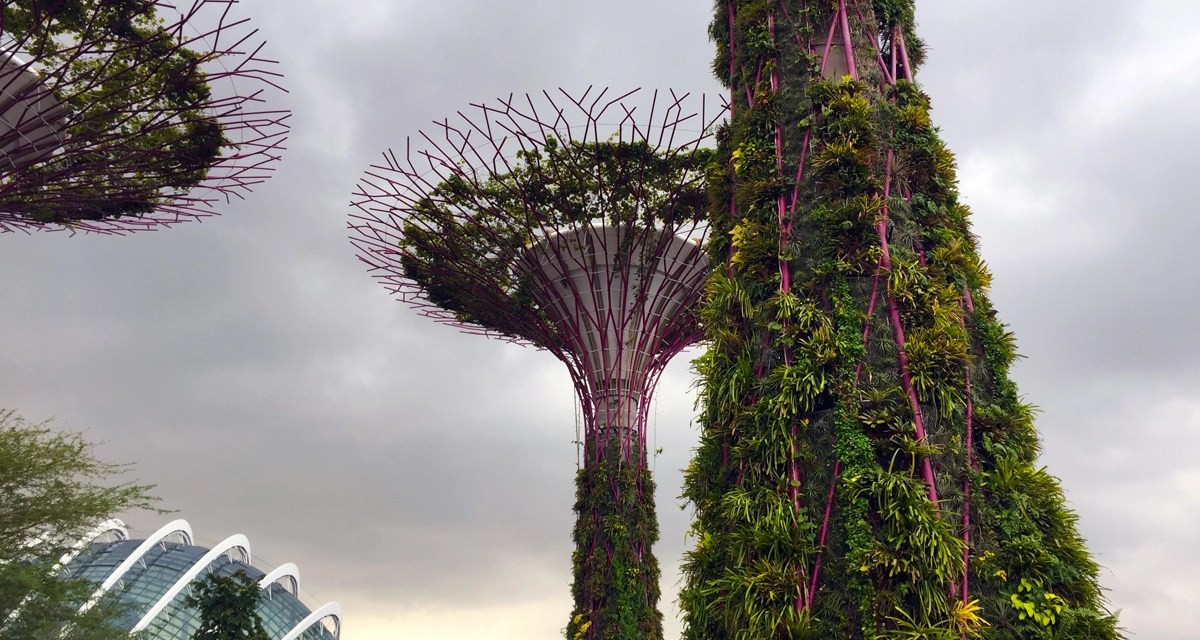 COVID-19: Singapore / Australia / New Zealand travel bubble – what's that all about?