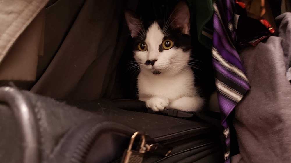 Image of a black and white kitten named Sprinkles.