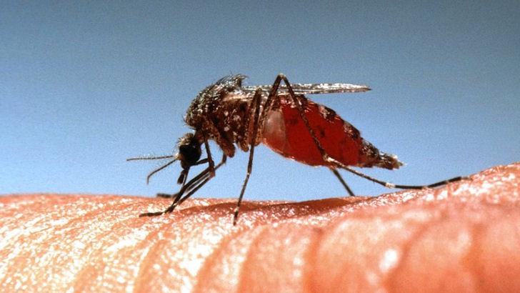 Stop kløen fra myggestik med simplet trick
