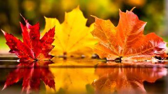 21. November i ord og begivenheder
