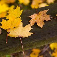 4. November i ord og begivenheder